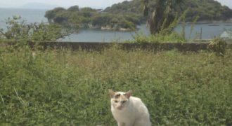 でこぼこ道を歩く~猫は介護に猫の手を貸してくれるわけではないけれど…~